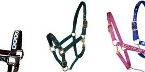Halter and Accessories