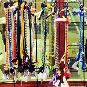 BROWBANDS_edited-1